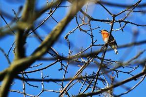 bird-287109_1280